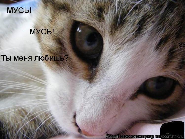 Котоматрица: запах колбасы!!! МУСЬ! МУСЬ! Ты меня любишь?