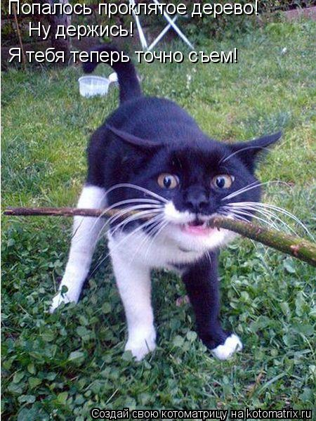 Котоматрица: Попалось проклятое дерево! Ну держись!   Я тебя теперь точно съем!