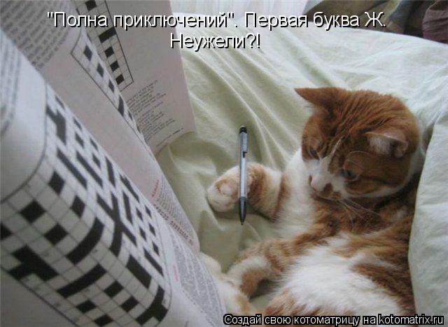 "Котоматрица: ""Полна приключений"". Первая буква Ж. Неужели?!"