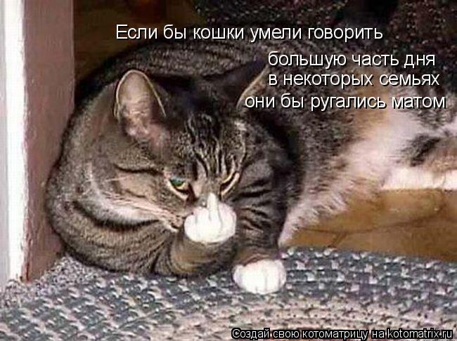 Котоматрица: Если бы кошки умели говорить большую часть дня они бы ругались матом в некоторых семьях