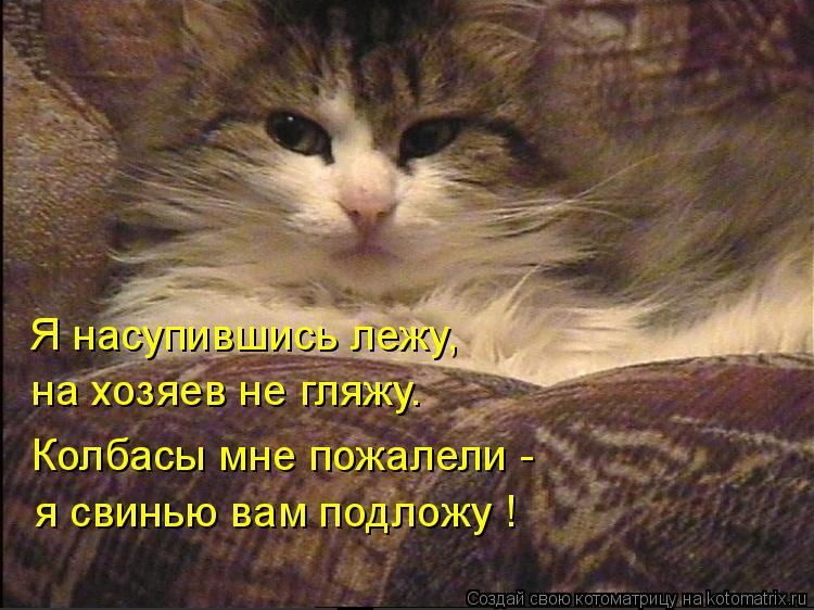 Котоматрица: Я насупившись лежу, на хозяев не гляжу. Колбасы мне пожалели - я свинью вам подложу !