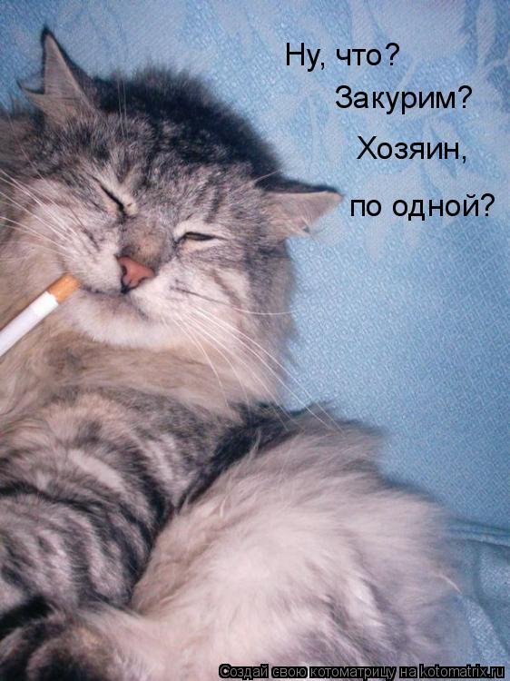 Котоматрица: Ну, что? Закурим? Хозяин, по одной?