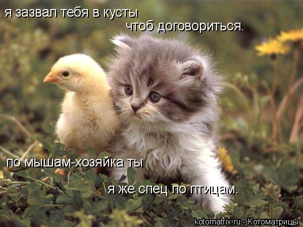 Котоматрица: я зазвал тебя в кусты чтоб договориться. пo мышам-хозяйка ты я же спец по птицам.
