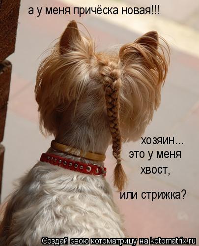 Котоматрица: а у меня причёска новая!!! хозяин... это у меня хвост, или стрижка?