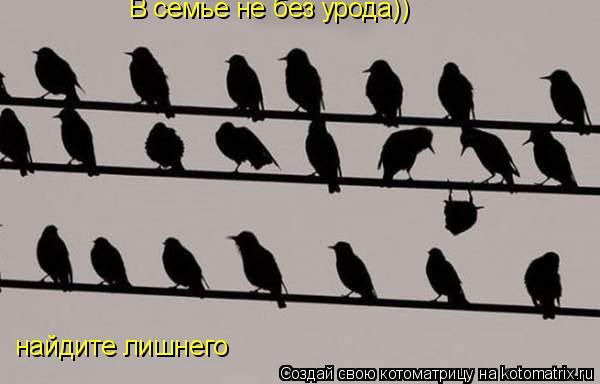 Котоматрица: найдите лишнего В семье не без урода))