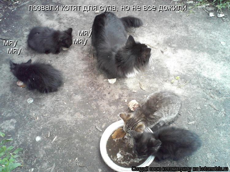 Котоматрица: позвали котят для супа, но не все дожили мяу мяу мяу мяу
