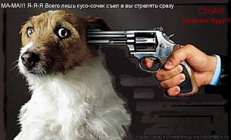 Котоматрица: Стой!!! стрелять буду!!! МА-МА!!! Я-Я-Я Всего лишь кусо-сочек съел а вы стрелять сразу