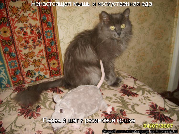 Котоматрица: Ненастоящая мышь и исскуственная еда Первый шаг к резиновой кошке