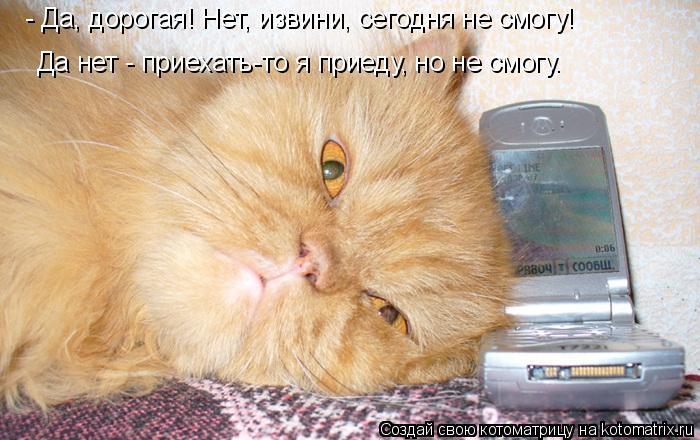 Котоматрица: - Да, дорогая! Нет, извини, сегодня не смогу!  Да нет - приехать-то я приеду, но не смогу.