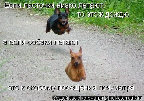 Котоматрица: Если ласточки низко летают, то это к дождю а если собаки летают это к скорому посещения психиатра