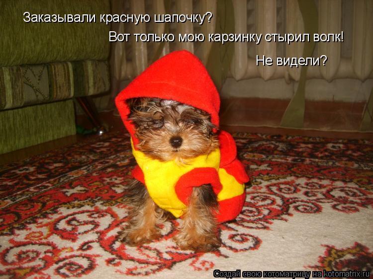 Котоматрица: Заказывали красную шапочку? Вот только мою карзинку стырил волк! Не видели?