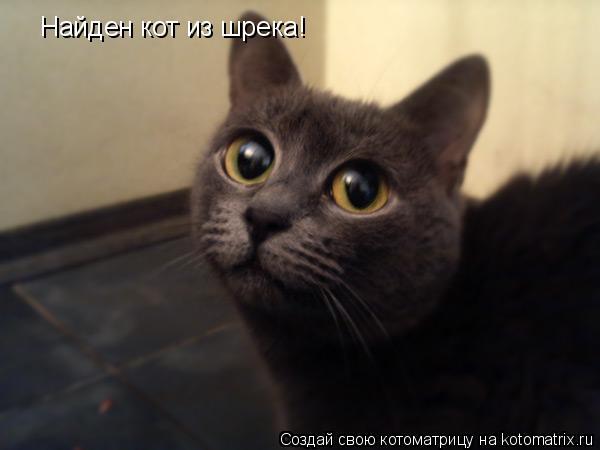 Котоматрица: Найден кот из шрека!