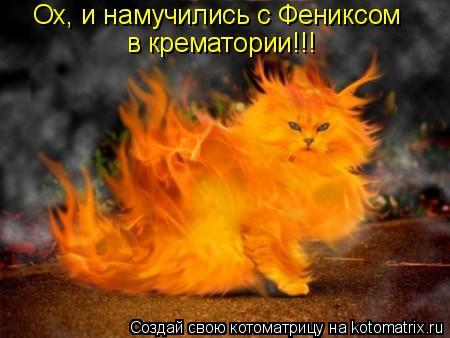 Котоматрица: Ох, и намучились с Фениксом в крематории!!!