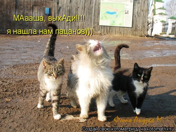 Котоматрица: МАааша, выхАди!!!!  я нашла нам пацанов)))