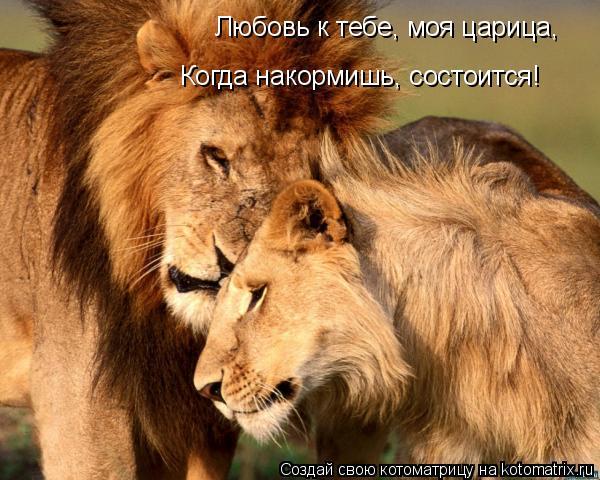 Котоматрица: Любовь к тебе, моя царица, Когда накормишь, состоится!