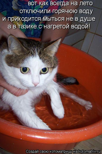Котоматрица: вот как всегда на лето  отключили горячюю воду и приходится мыться не в душе а в тазике с нагретой водой!