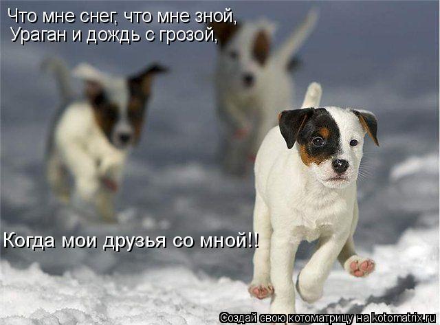 Котоматрица: Что мне снег, что мне зной, Ураган и дождь с грозой, Когда мои друзья со мной!!
