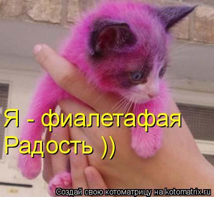 Котоматрица: Я - фиалетафая Радость ))