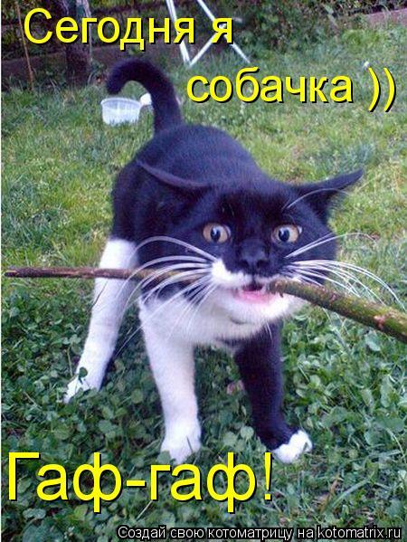 Котоматрица: Гаф-гаф! Сегодня я собачка ))