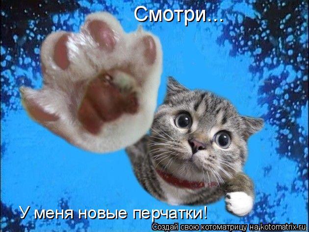 Котоматрица: Смотри... У меня новые перчатки!