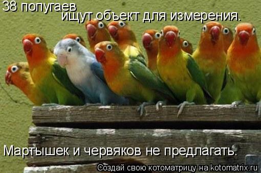 Котоматрица: 38 попугаев  ищут объект для измерения.  Мартышек и червяков не предлагать.