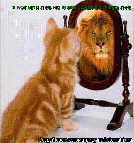 Котоматрица: я кот или лев но мама кошка а папа лев я кот или лев но мама кошка а папа лев