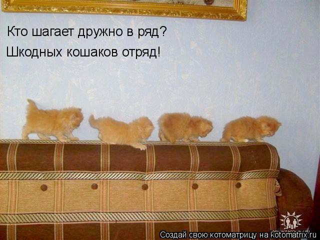 Котоматрица: Кто шагает дружно в ряд? Шкодных кошаков отряд!