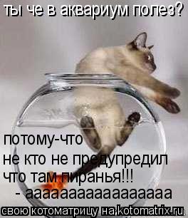 Котоматрица: ты че в аквариум полез? потому-что не кто не предупредил что там пиранья!!! - ааааааааааааааааа