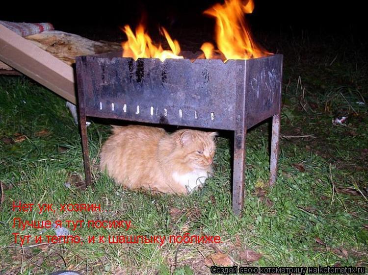 Котоматрица: Нет уж, хозяин... Лучше я тут посижу... Тут и тепло, и к шашлыку поближе.