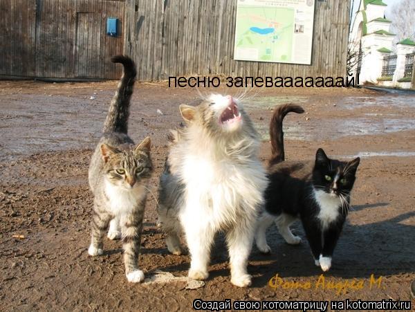Котоматрица: песню запевааааааай!