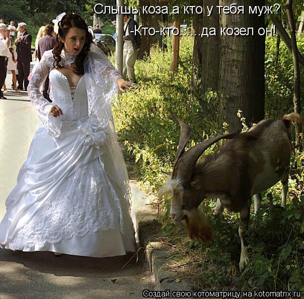 Котоматрица: -Кто-кто......да козел он! Слышь,коза,а кто у тебя муж?