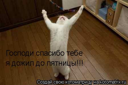 Котоматрица: Господи спасибо тебе я дожил до пятницы!!!