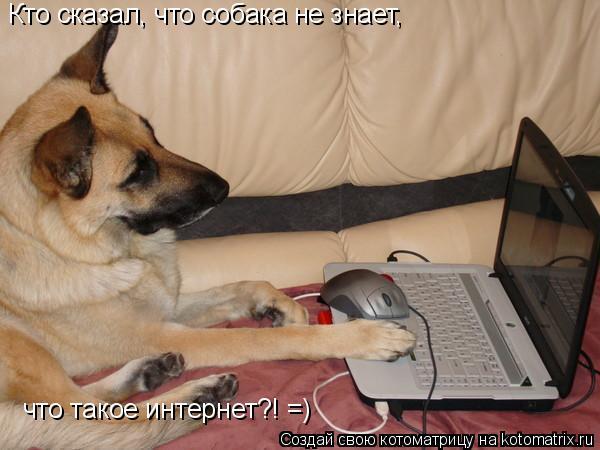 Котоматрица: Кто сказал, что собака не знает,  что такое интернет?! =)
