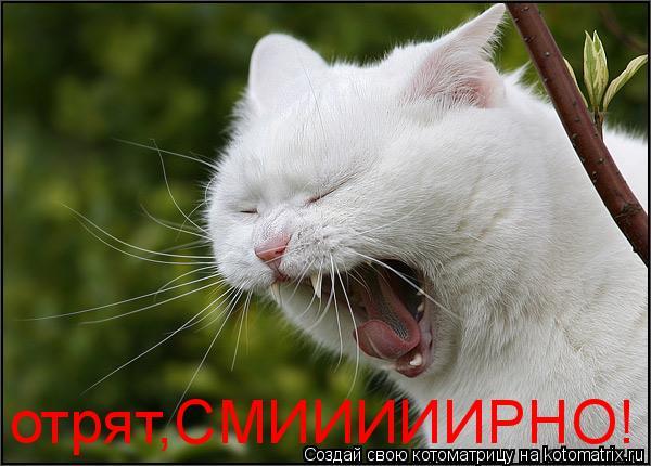 Котоматрица: отрят,СМИИИИИРНО!
