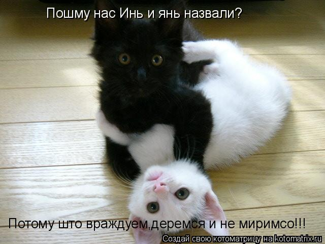 Котоматрица: Пошму нас Инь и янь назвали? Потому што враждуем,деремся и не миримсо!!!