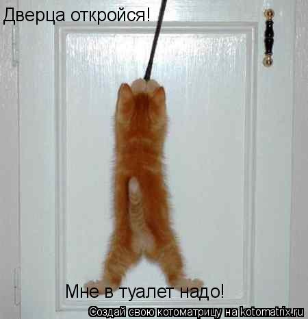 http://kotomatrix.ru/images/lolz/2009/06/20/Uj.jpg