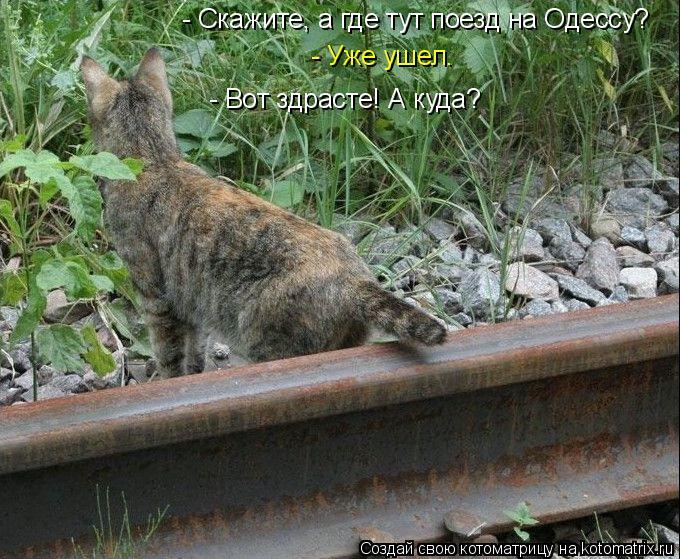 Котоматрица: - Скажите, а где тут поезд на Одессу? - Уже ушел. - Вот здрасте! А куда?
