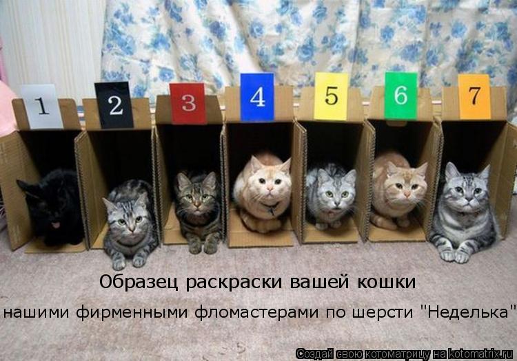 """Котоматрица: Образец раскраски вашей кошки нашими фирменными фломастерами по шерсти """"Неделька"""""""