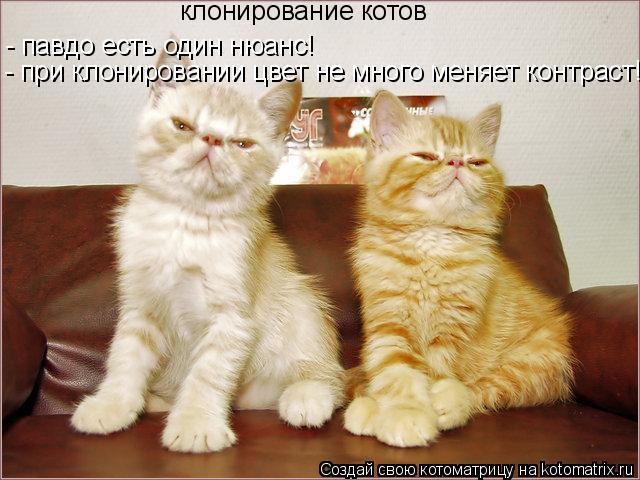 Котоматрица: клонирование котов - павдо есть один нюанс! - при клонировании цвет не много меняет контраст!