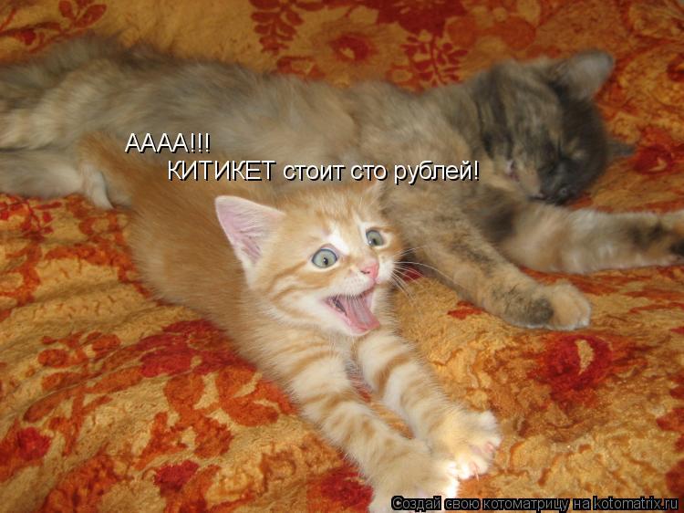 Котоматрица: АААА!!! КИТИКЕТ стоит сто рублей!