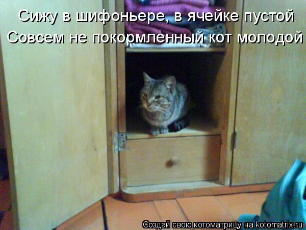 Котоматрица: Сижу в шифоньере, в ячейке пустой Совсем не покормленный кот молодой