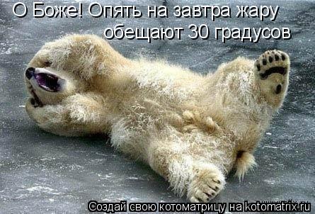 Котоматрица: О Боже! Опять на завтра жару обещают 30 градусов