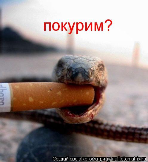 Котоматрица: покурим?