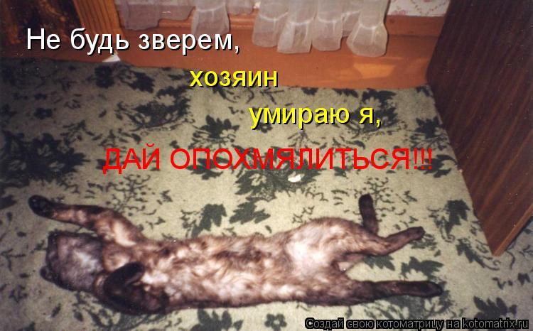 Котоматрица: Не будь зверем, хозяин умираю я, ДАЙ ОПОХМЯЛИТЬСЯ!!!
