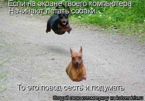 Котоматрица: Если на экране твоего компьютера Начинают летать собаки То это повод сесть и подумать