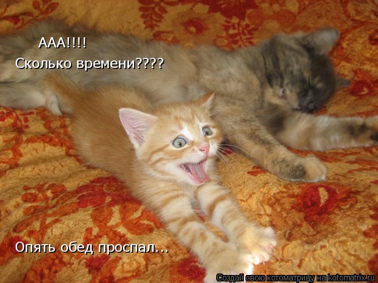 Котоматрица: ААА!!!!  Сколько времени???? Опять обед проспал...