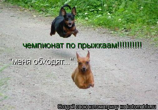 """Котоматрица: чемпионат по прыжкаам!!!!!!!!!! """"меня обходят..."""""""