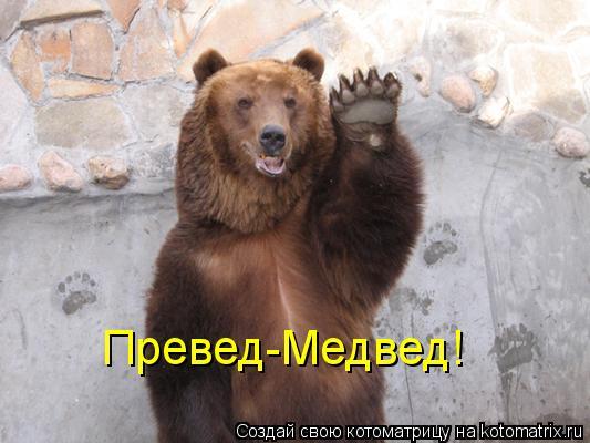 Котоматрица: Превед-Медвед!