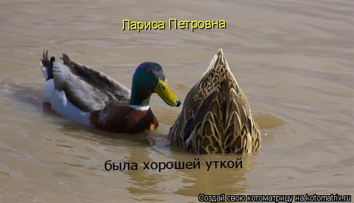 Котоматрица: Лариса Петровна  была хорошей уткой