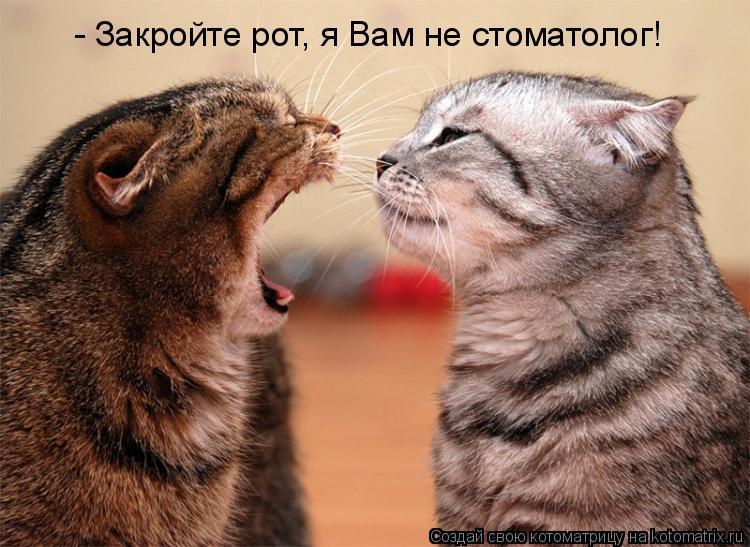 Котоматрица: - Закройте рот, я Вам не стоматолог!
